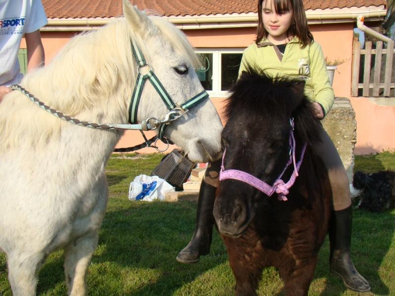 KIWI et CAPUCINE (décédée) - ONC poney présumées nées en 1990 - adoptées en octobre 2008 par caro38 - Page 2 Dsc07117
