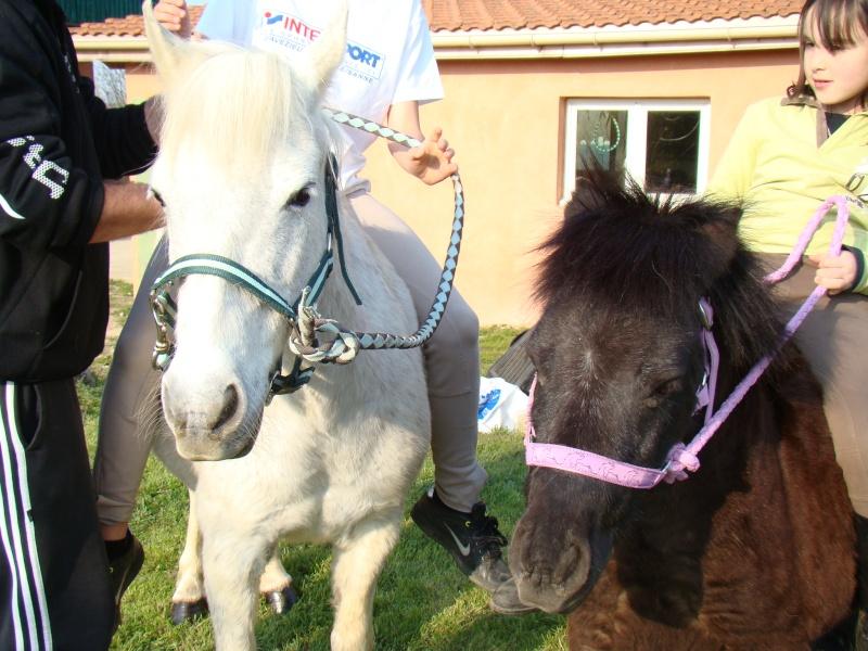 KIWI et CAPUCINE (décédée) - ONC poney présumées nées en 1990 - adoptées en octobre 2008 par caro38 - Page 2 Dsc07118