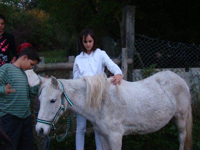 KIWI et CAPUCINE (décédée) - ONC poney présumées nées en 1990 - adoptées en octobre 2008 par caro38 - Page 2 Dsc09513