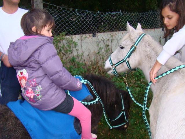 KIWI et CAPUCINE (décédée) - ONC poney présumées nées en 1990 - adoptées en octobre 2008 par caro38 - Page 2 Dsc09520