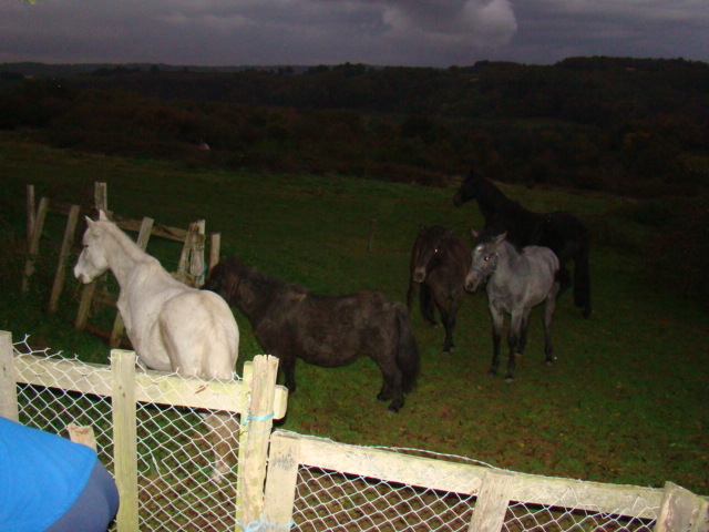 KIWI et CAPUCINE - ONC poney présumées nées en 1990 - adoptées en octobre 2008 par caro38 - Page 2 Dsc09521