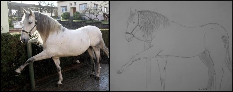 Propose de dessiner gratuitement vos chevaux !  15705110