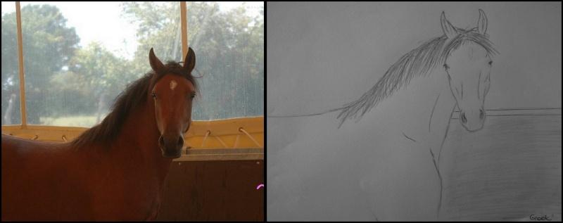 Propose de dessiner gratuitement vos chevaux !  63591_10