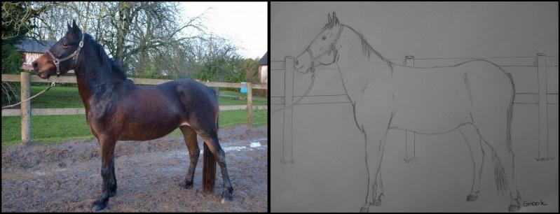 Propose de dessiner gratuitement vos chevaux !  _bmp1010