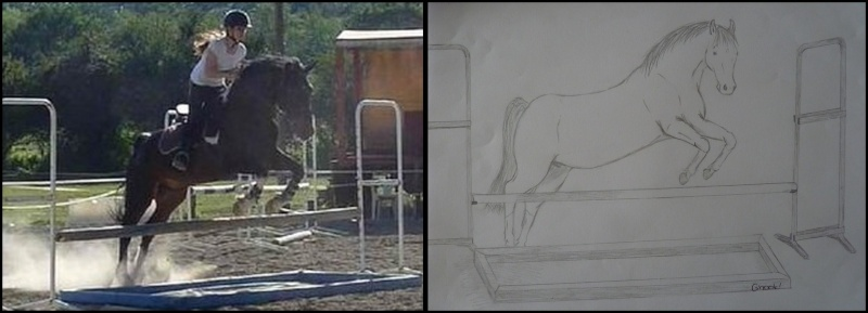 Propose de dessiner gratuitement vos chevaux !  Hercul10