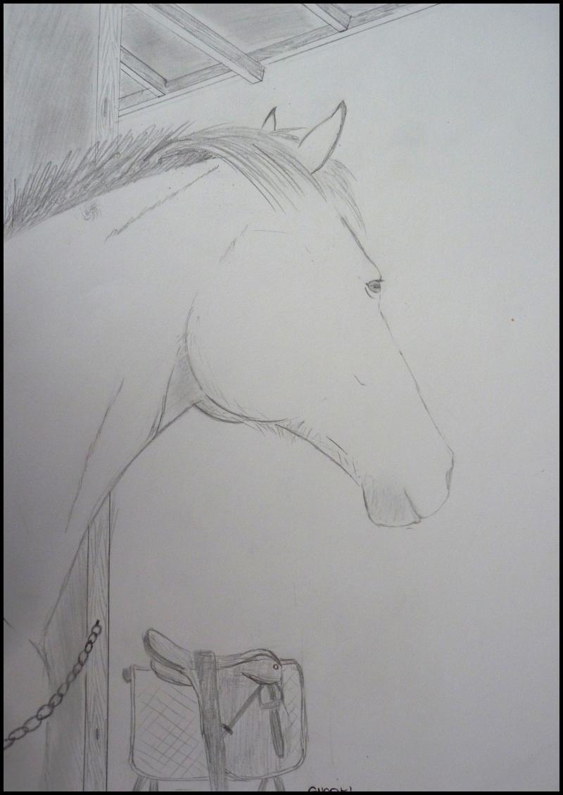 Propose de dessiner gratuitement vos chevaux !  - Page 4 P1070010