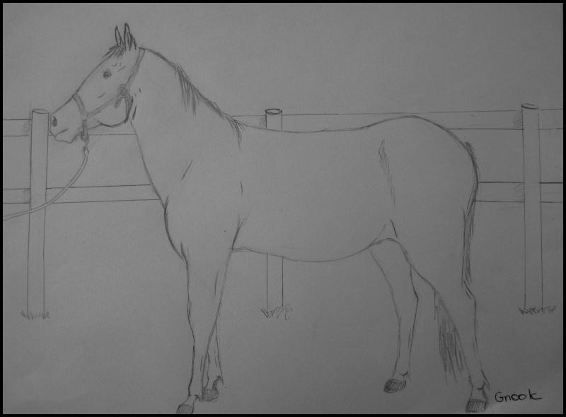 Propose de dessiner gratuitement vos chevaux !  - Page 4 P1070011