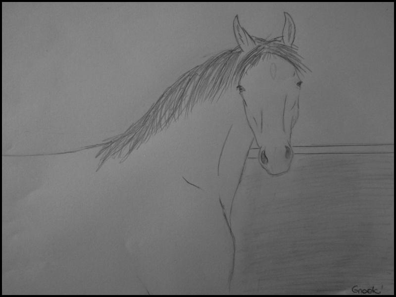 Propose de dessiner gratuitement vos chevaux !  - Page 4 P1070012
