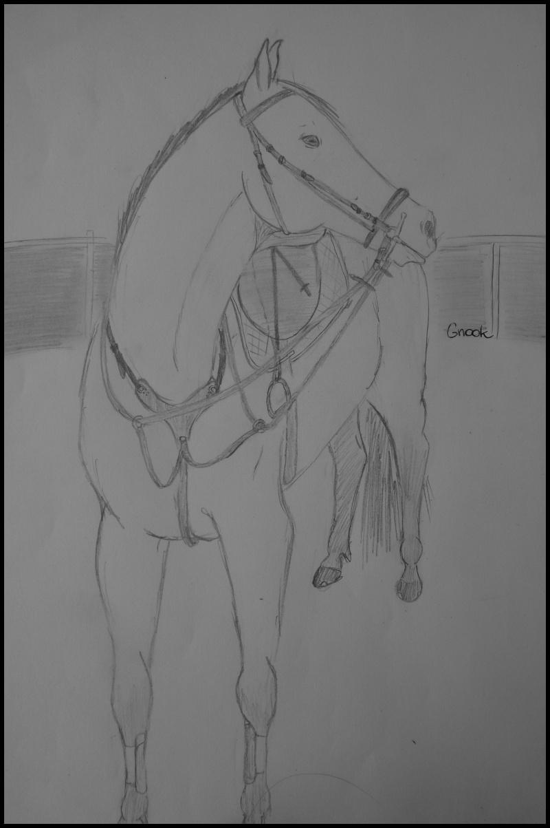 Propose de dessiner gratuitement vos chevaux !  - Page 4 P1070013
