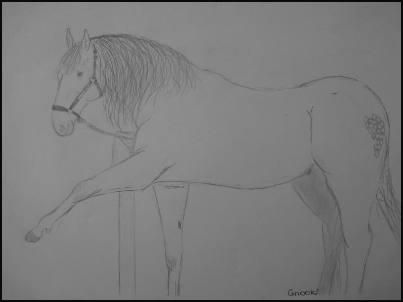 Propose de dessiner gratuitement vos chevaux !  - Page 4 P1070014