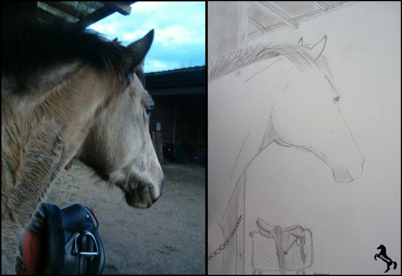 Propose de dessiner gratuitement vos chevaux !  World_10