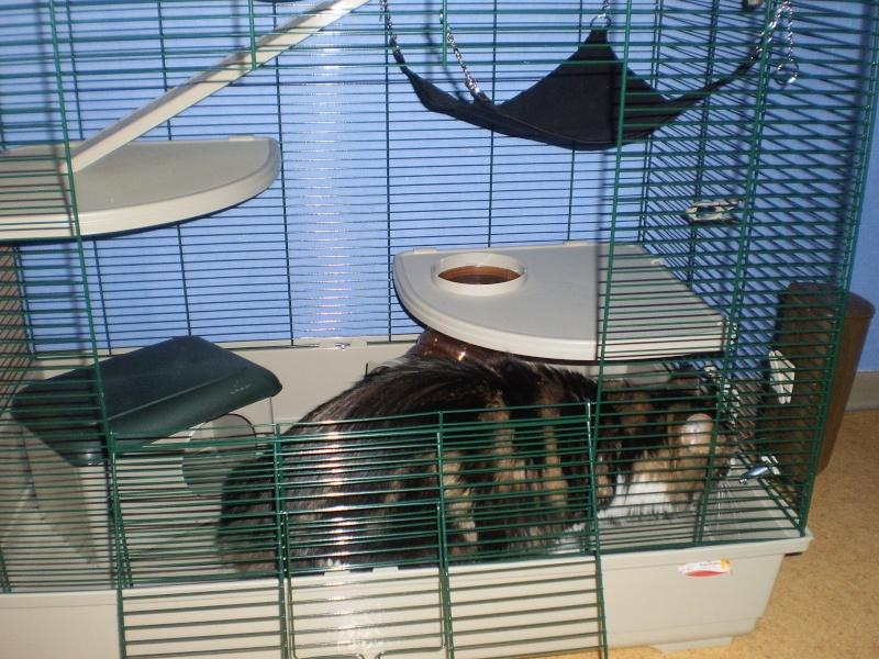 Ma cage P2150010