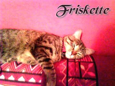 Animal-World missions et/ou quizz ! Friske12