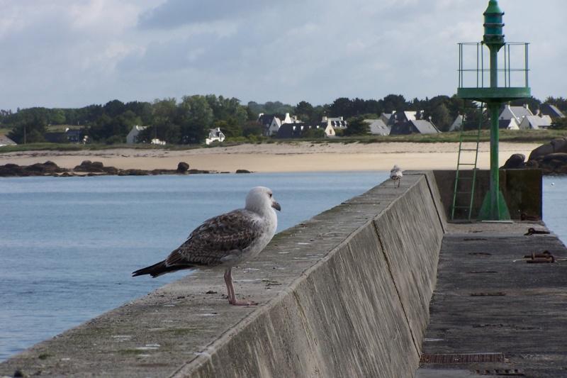 Oiseaux marins 29_poi10