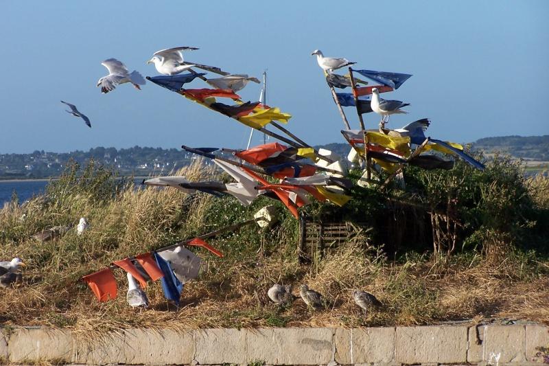 Oiseaux marins 44_le_10