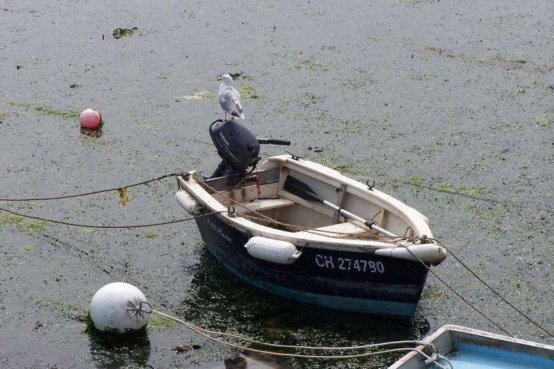 Paysage marins et pollution 50barf11