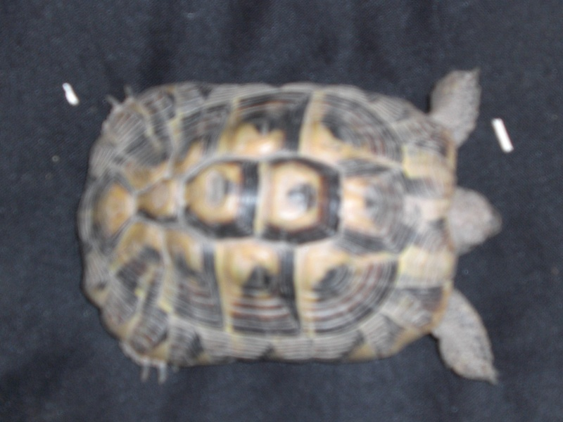 identification tortues de Caille - Page 2 211
