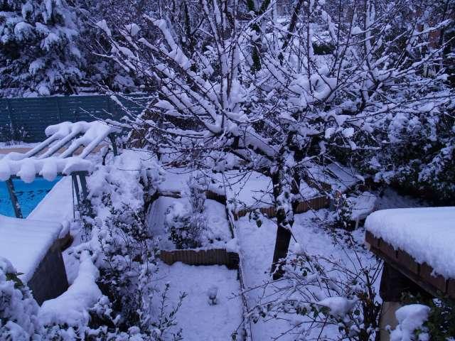 Il neige sur Perpignan ... Vive l'hibernation in natura ! - Page 2 P3082311
