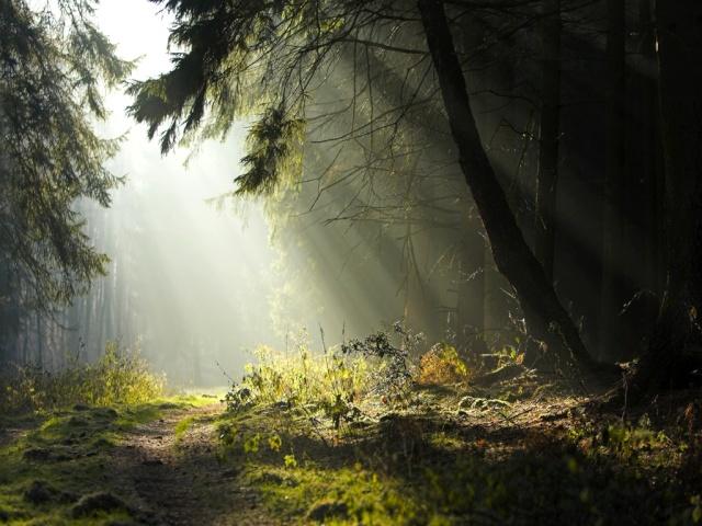 Les Bois Forest10