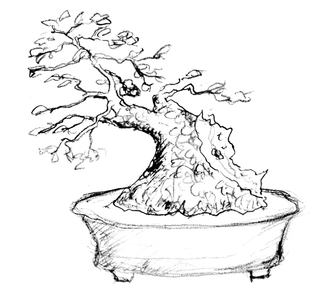 Prunus Mahaleb Prunus12