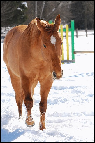 - Activité n°3: Le plus beau cheval. Sans_t11