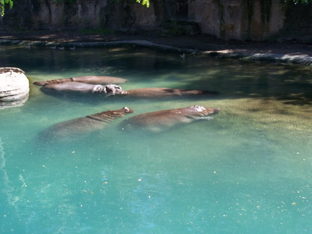 Disney's Animal Kingdom à Walt Disney World Resort 100_1520