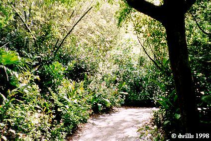 Disney's Animal Kingdom à Walt Disney World Resort Aka811