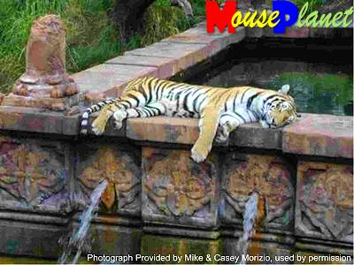 Disney's Animal Kingdom à Walt Disney World Resort Mahara20