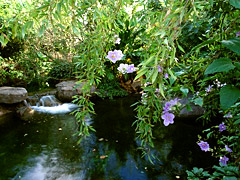 Disney's Animal Kingdom à Walt Disney World Resort Oasis_11