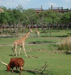 Disney's Animal Kingdom à Walt Disney World Resort Wdw_ki10