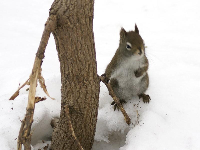 L'écureuil du Québec prend la pause... Ecureu10