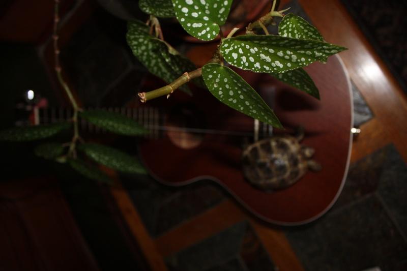 photo  en vrac du ukulele Img_0111