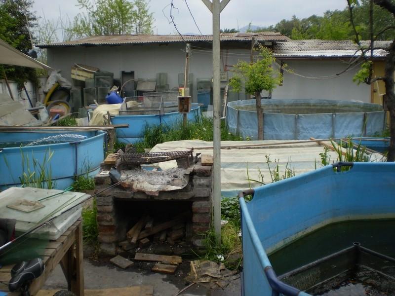 Criadero de Ciclidos Africanos de Atilio en Peñaflor Pa060041