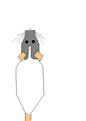 Les différents marquages du rat Rat_ca10
