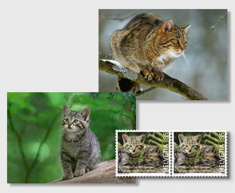Katzen 14849110