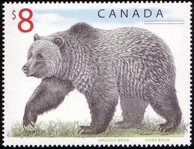 Bären Ca164710