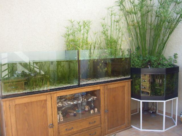bassin d'interieur ou aquabassin cela se discute Patio10