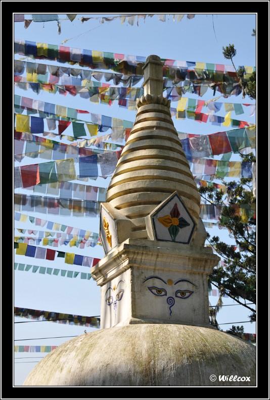 Népal - Novembre 2010 Yd0_9358
