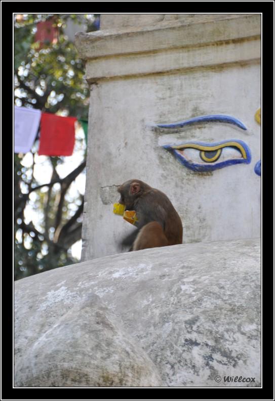 Népal - Novembre 2010 Yd0_9359