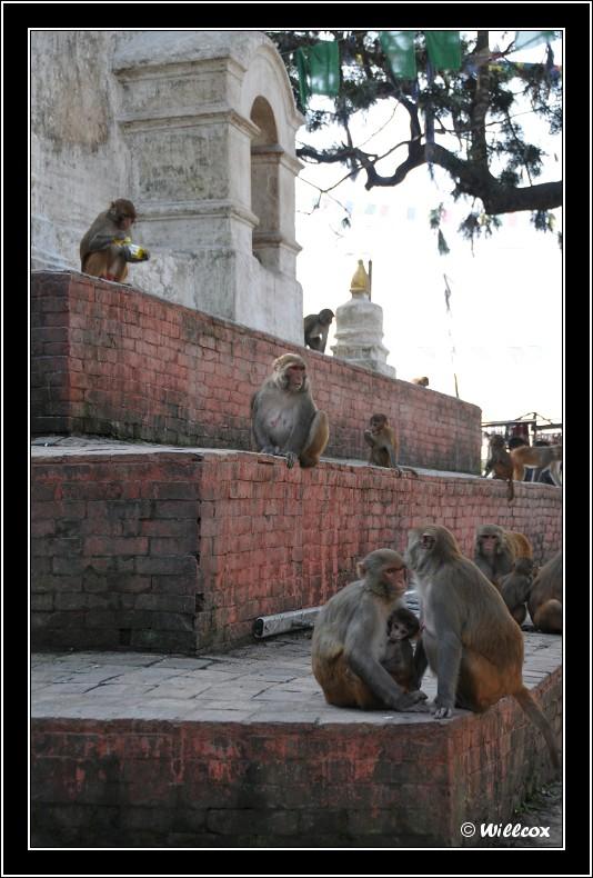 Népal - Novembre 2010 Yd0_9361