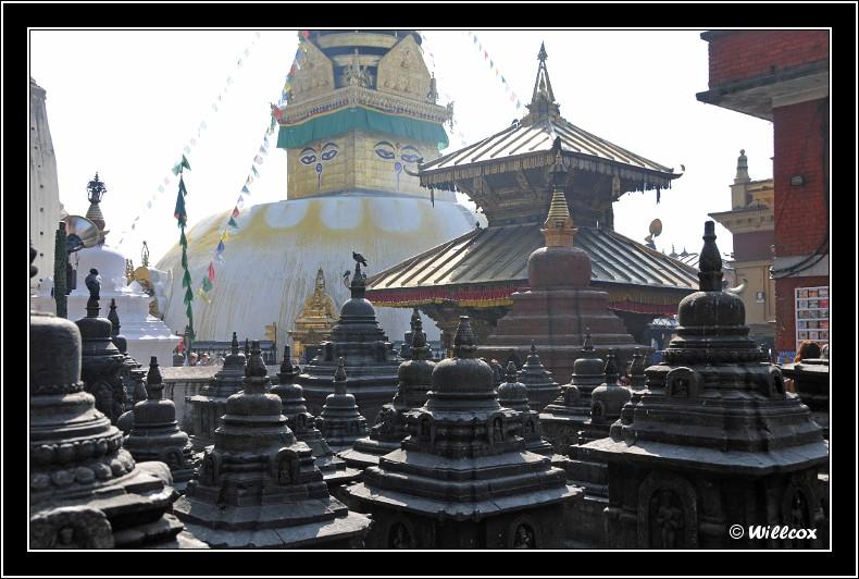 Népal - Novembre 2010 Yd0_9380