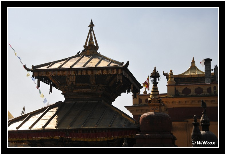 Népal - Novembre 2010 Yd0_9412