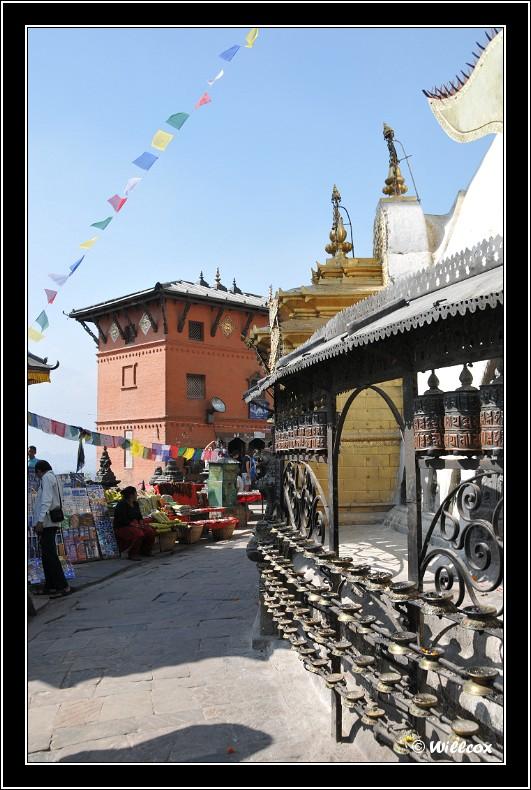 Népal - Novembre 2010 Yd0_9416