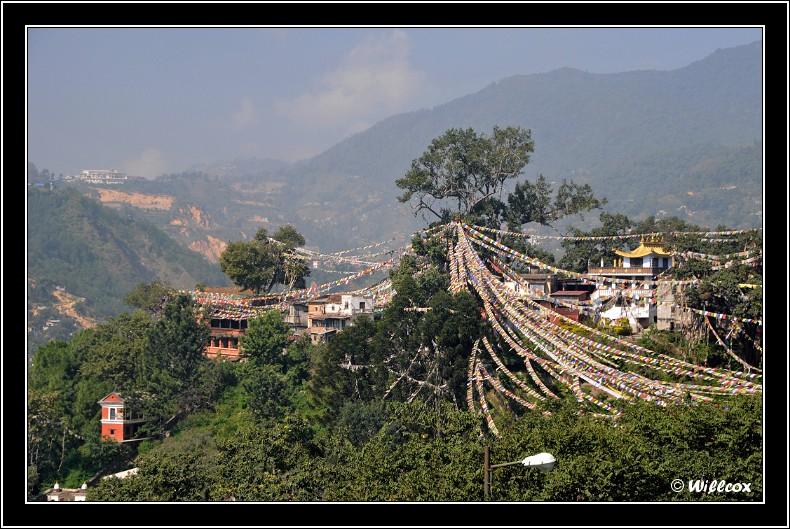 Népal - Novembre 2010 Yd0_9427
