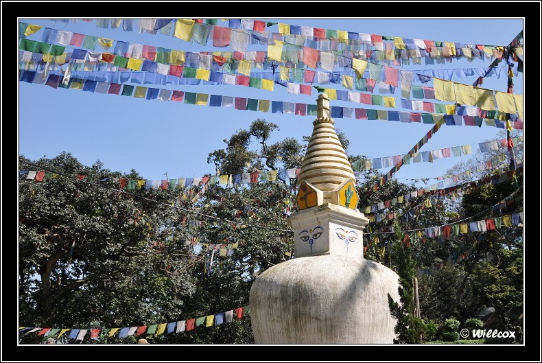 Népal - Novembre 2010 Yd0_9429