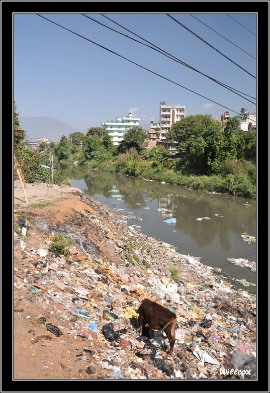 Népal - Novembre 2010 Yd0_9431