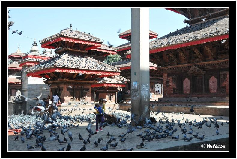Népal - Novembre 2010 Yd0_9448