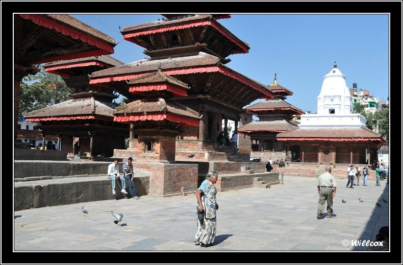 Népal - Novembre 2010 Yd0_9510