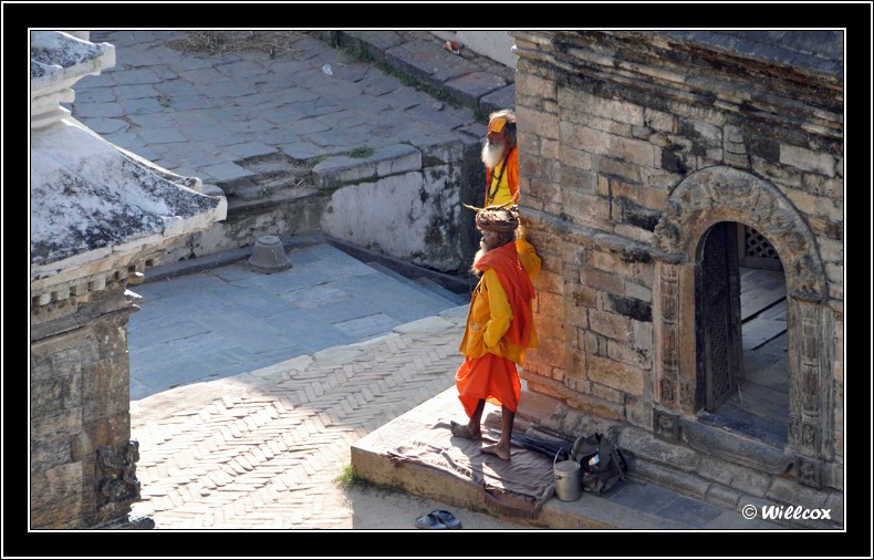 Népal - Novembre 2010 Yd0_9616