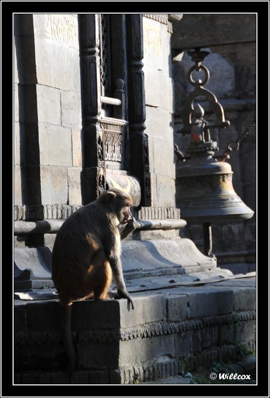 Népal - Novembre 2010 Yd0_9617